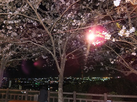 夜景と夜桜